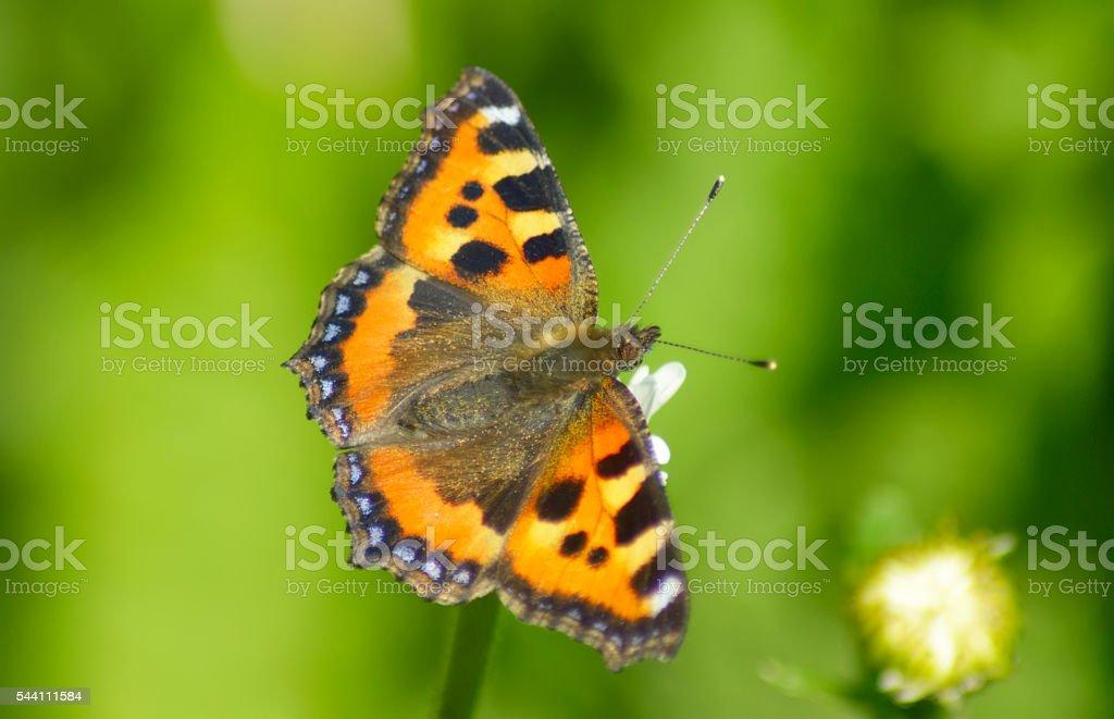 beautiful butterfly on summer meadow stock photo