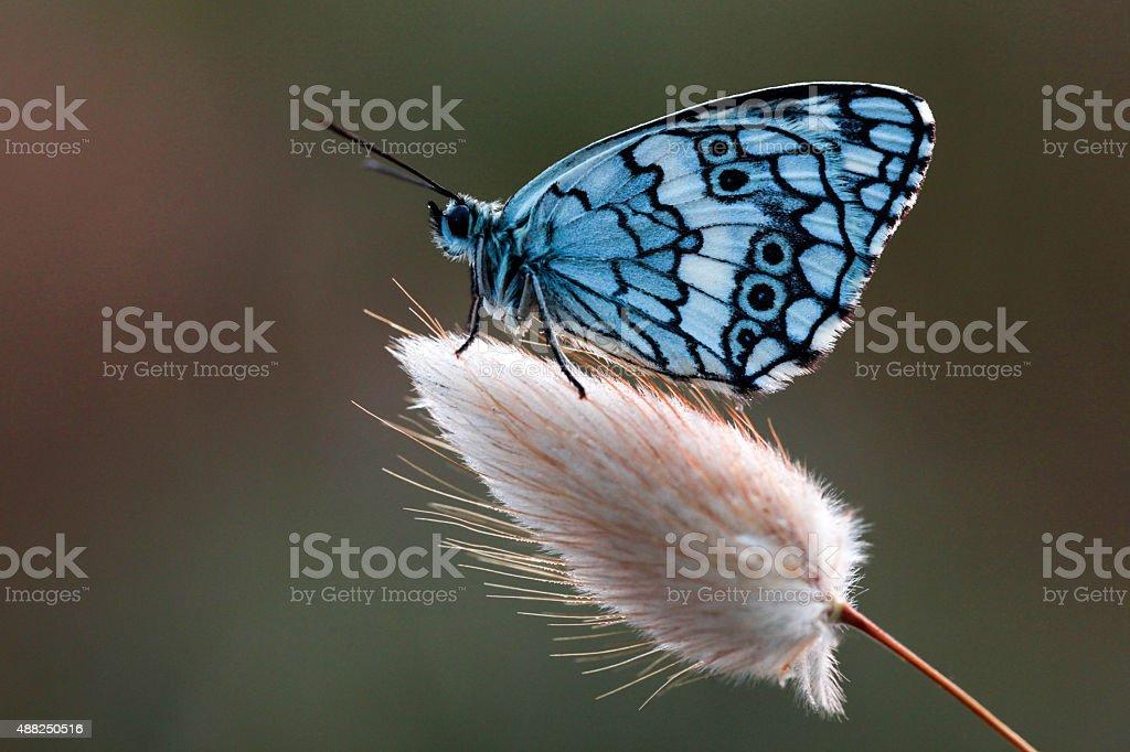 Beautiful Butterfly stock photo