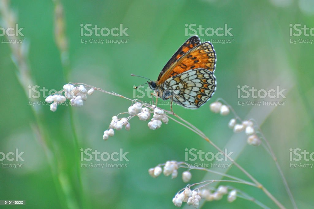 Beautiful butterfly with green background stock photo