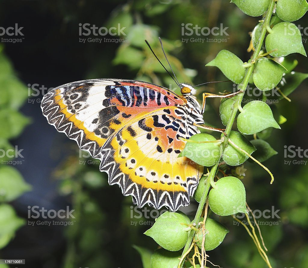 Beautiful butterflying royalty-free stock photo