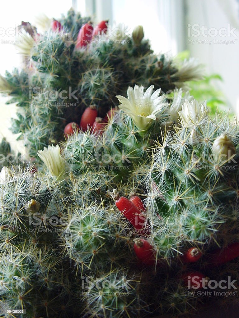 Beaux cactus photo libre de droits
