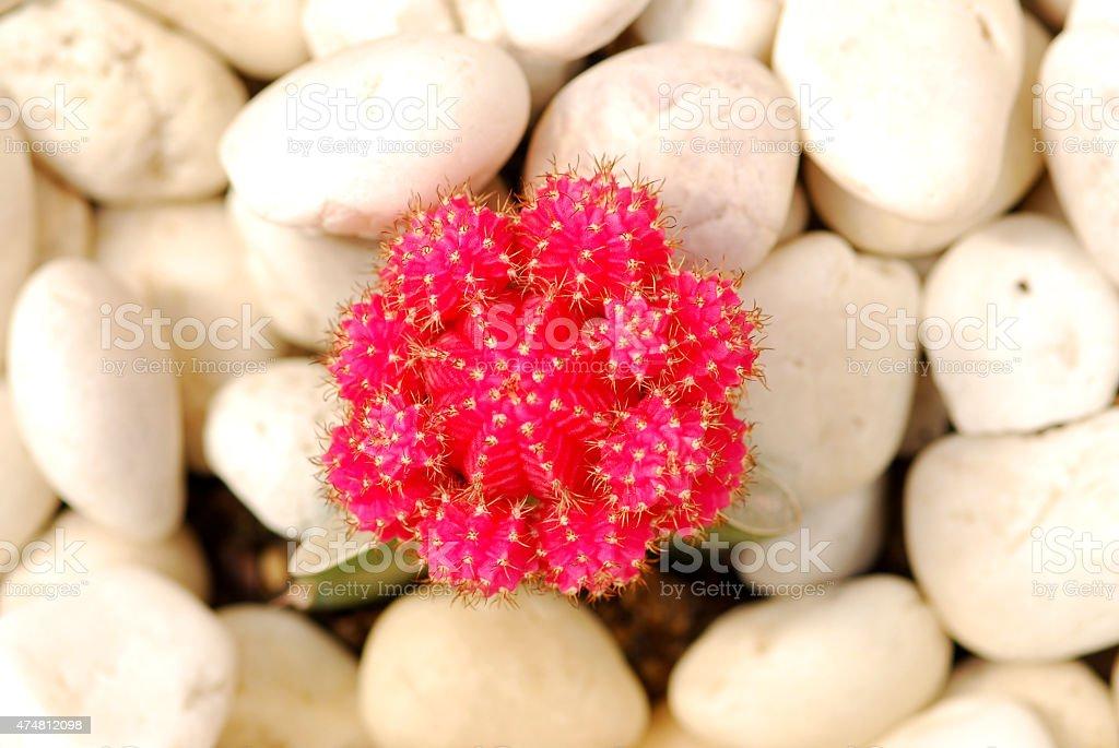 Piękne Kaktus roślin w ogrodzie zbiór zdjęć royalty-free