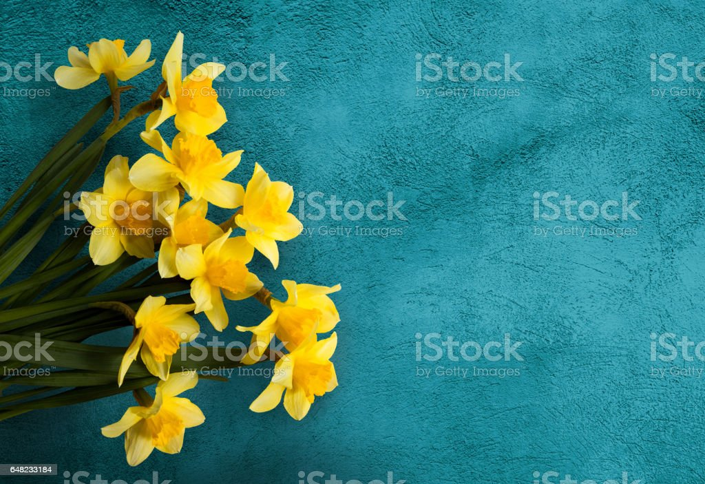 Beautiful Card with Yellow flowers jonquils stock photo