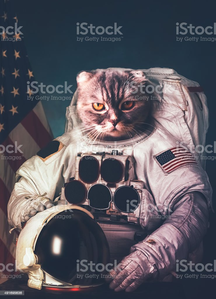 Beautiful cat astronaut. Elements of this image furnished by NAS stock photo