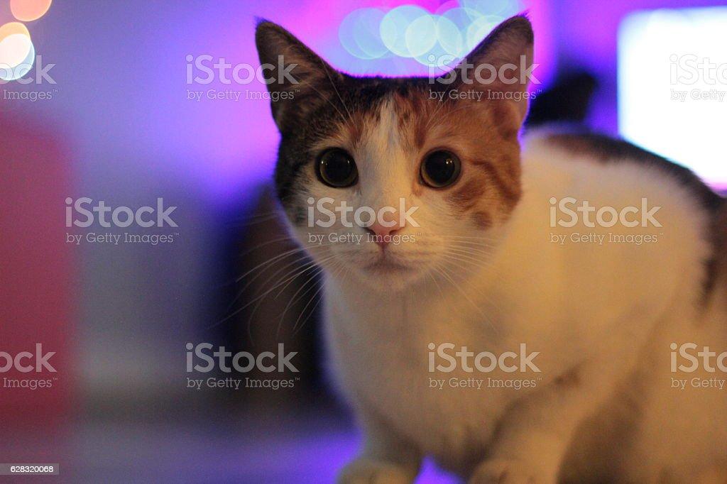 Beautiful Cat in Lights stock photo