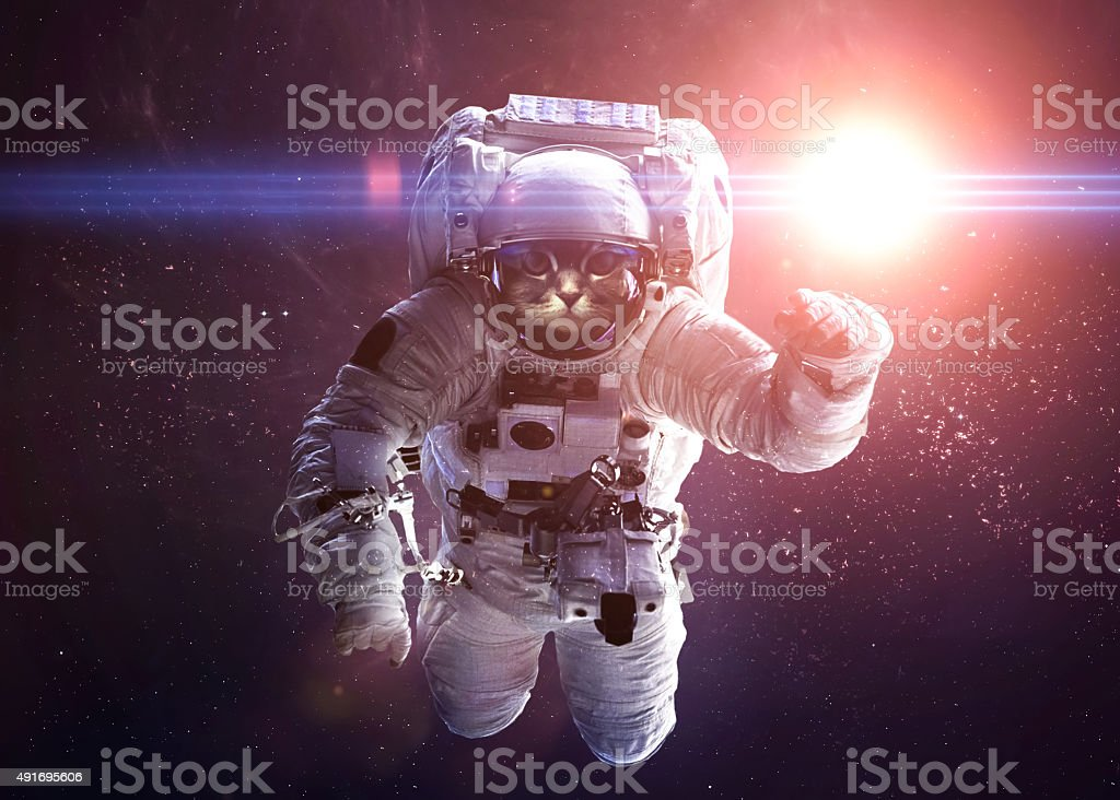 Beautiful cat in outer space. Elements of this image furnished stock photo