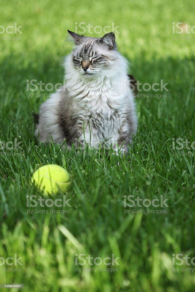beautiful cat that won't fetch royalty-free stock photo
