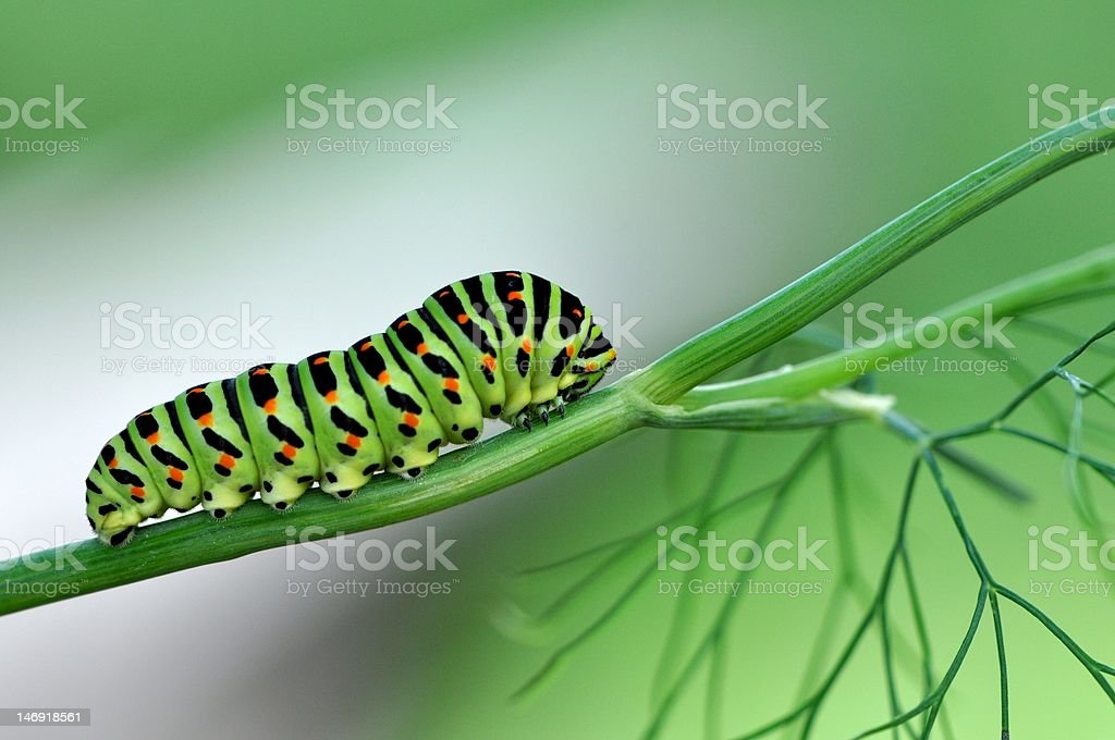 Beautiful caterpillar stock photo