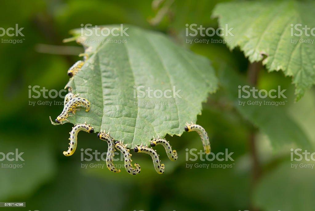 beautiful caterpillars stock photo