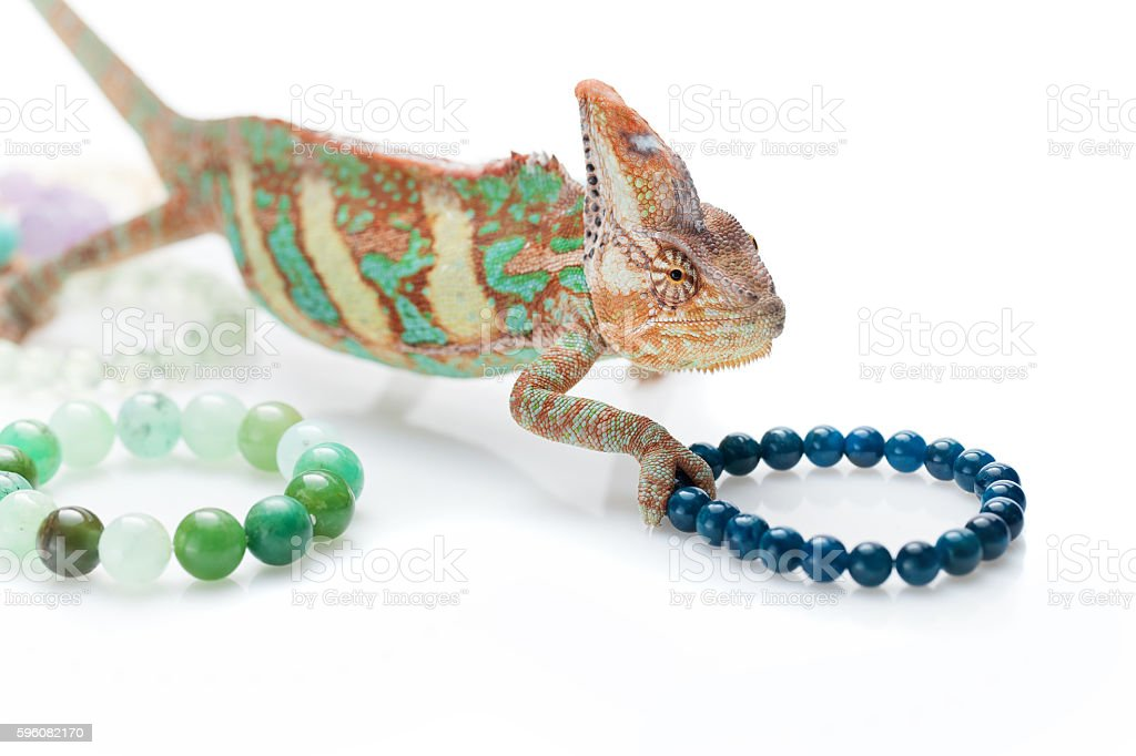 Beautiful chameleon with natural stone bracelets stock photo