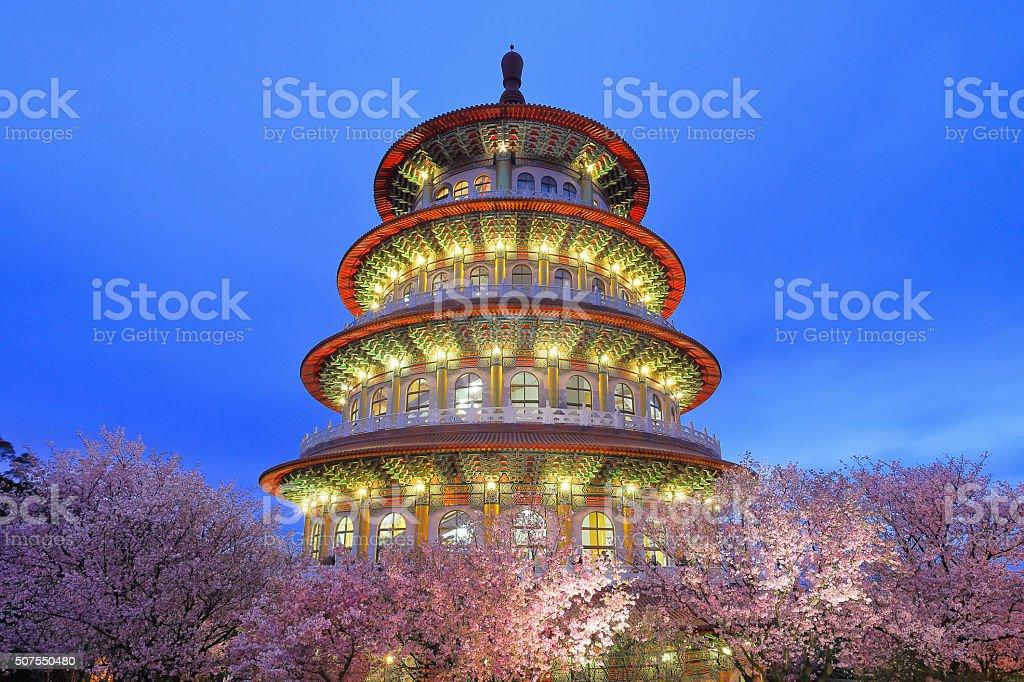 Beautiful Cherry Blossom Garden stock photo