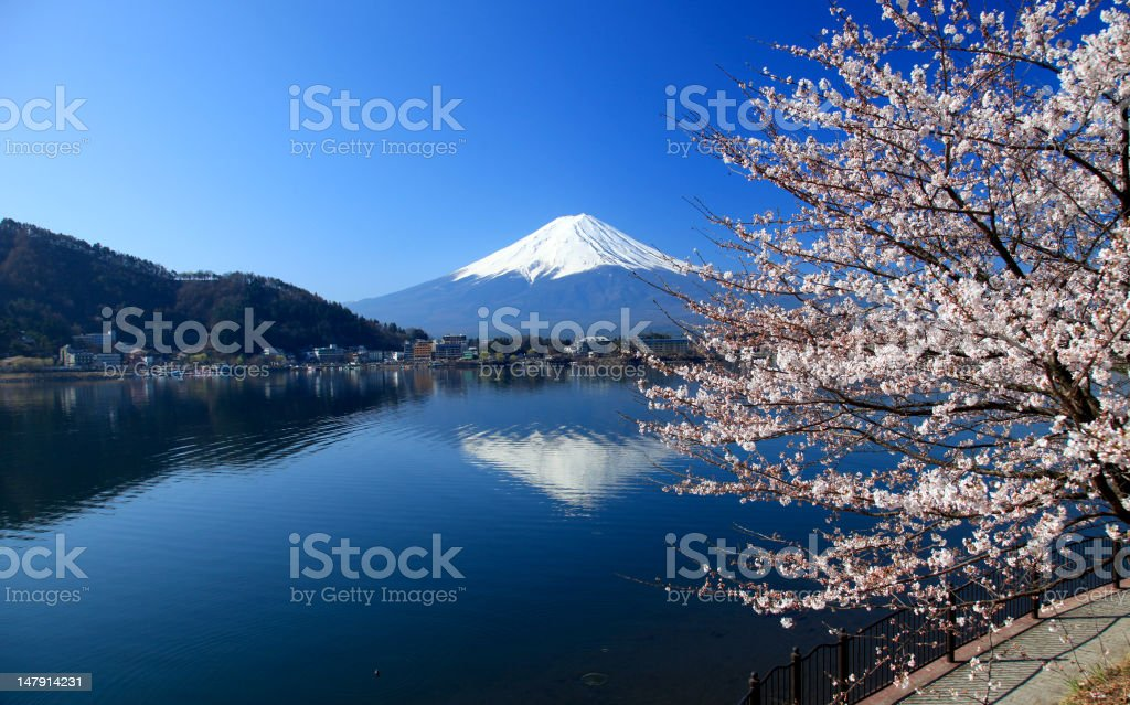Beautiful cherry blossoms with Mount Fuji, japan royalty-free stock photo