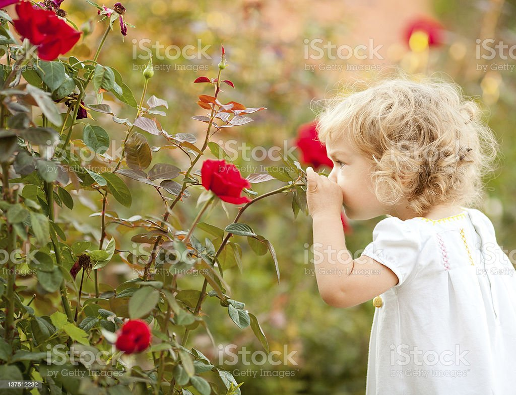 Beautiful child smelling rose royalty-free stock photo