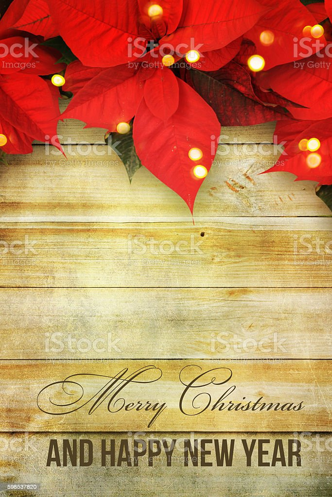beautiful christmas background with red poinsettia stock photo