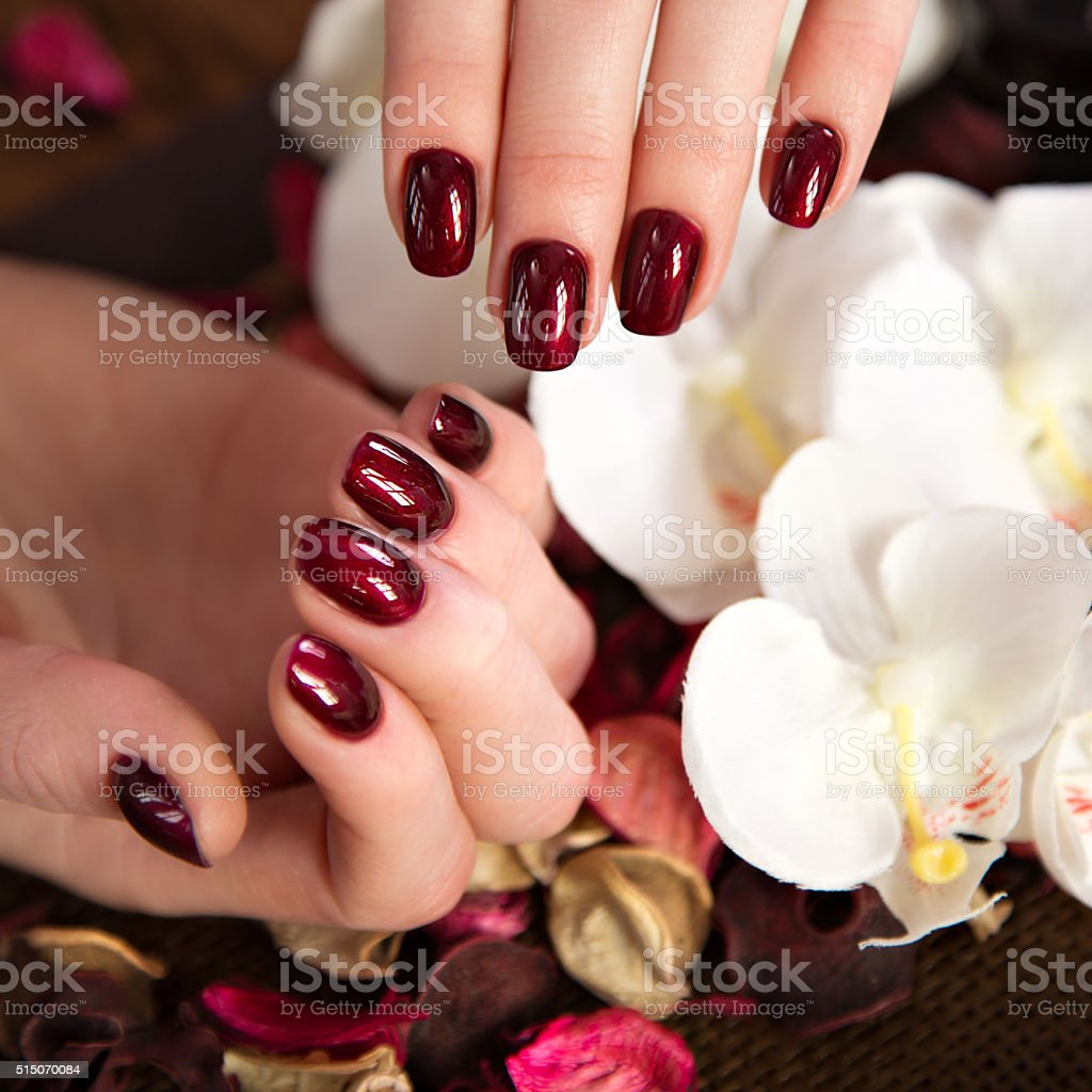 Beautiful classic red manicure on female hand. Close-up stock photo