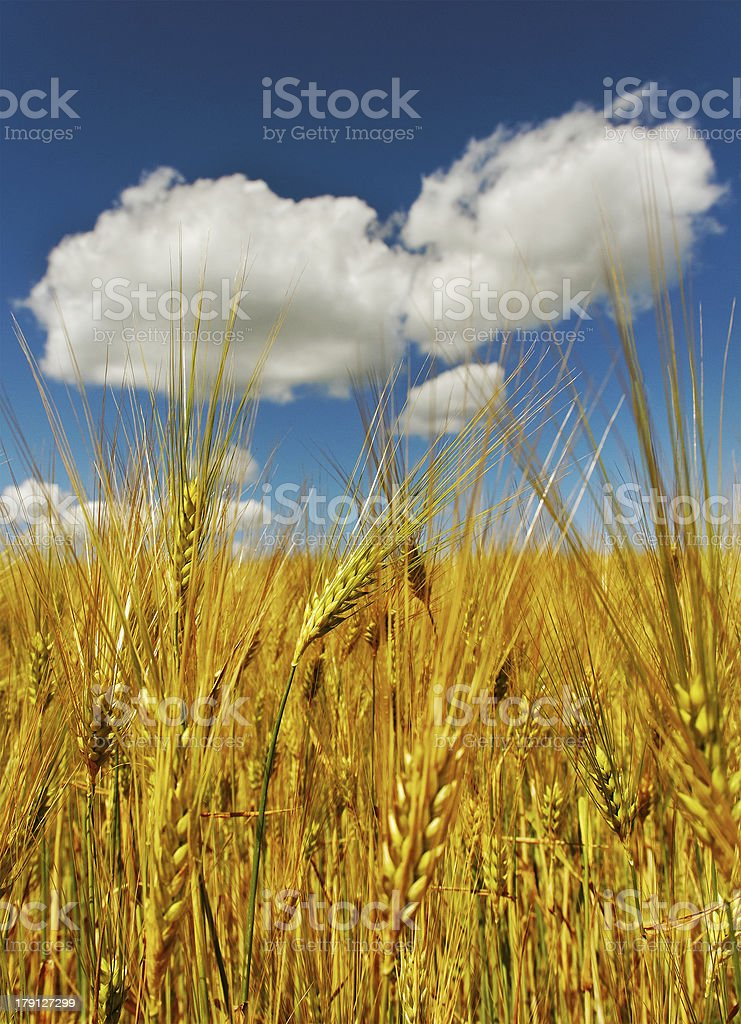 Beautiful clouds above field. royalty-free stock photo