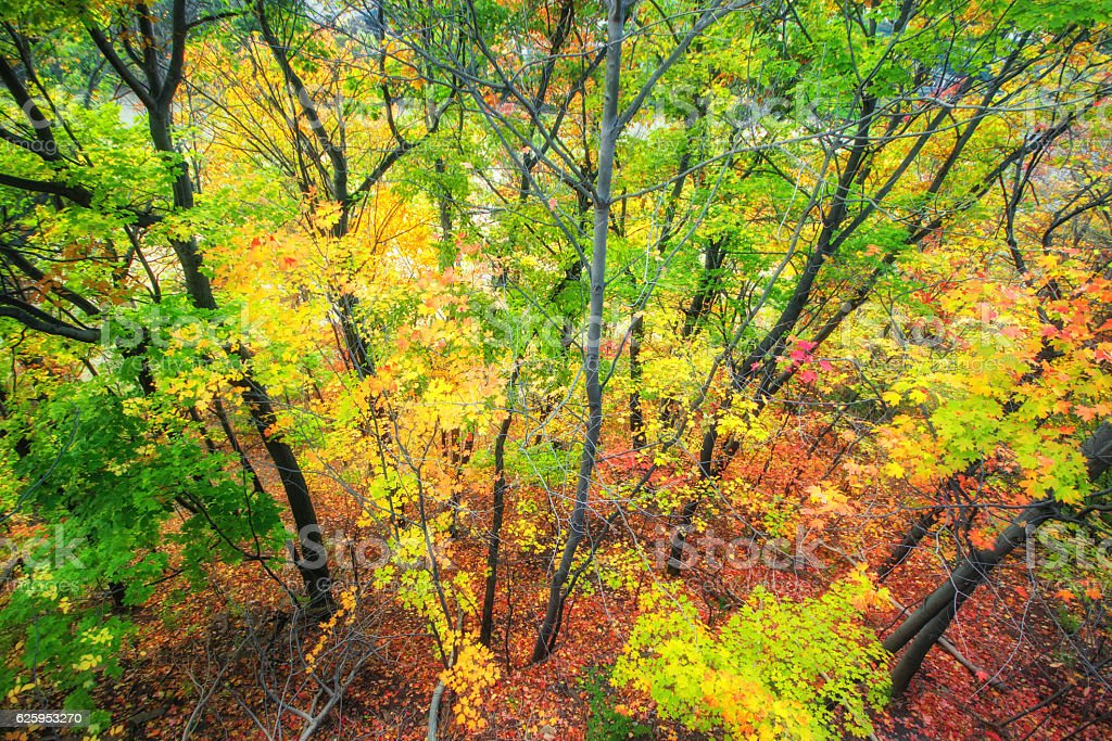 Beautiful colorful Autumn leaves in Rochester City of New York. royalty-free stock photo