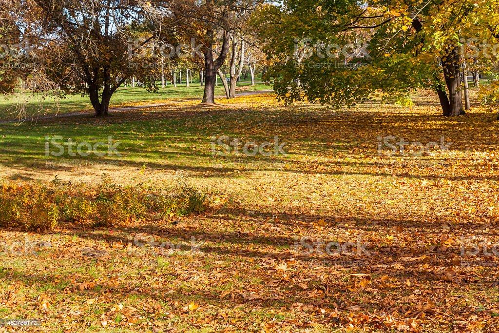 Beautiful Colorful Autumn Leaves stock photo