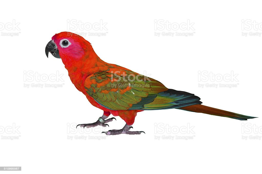 Beautiful colorful bird stock photo
