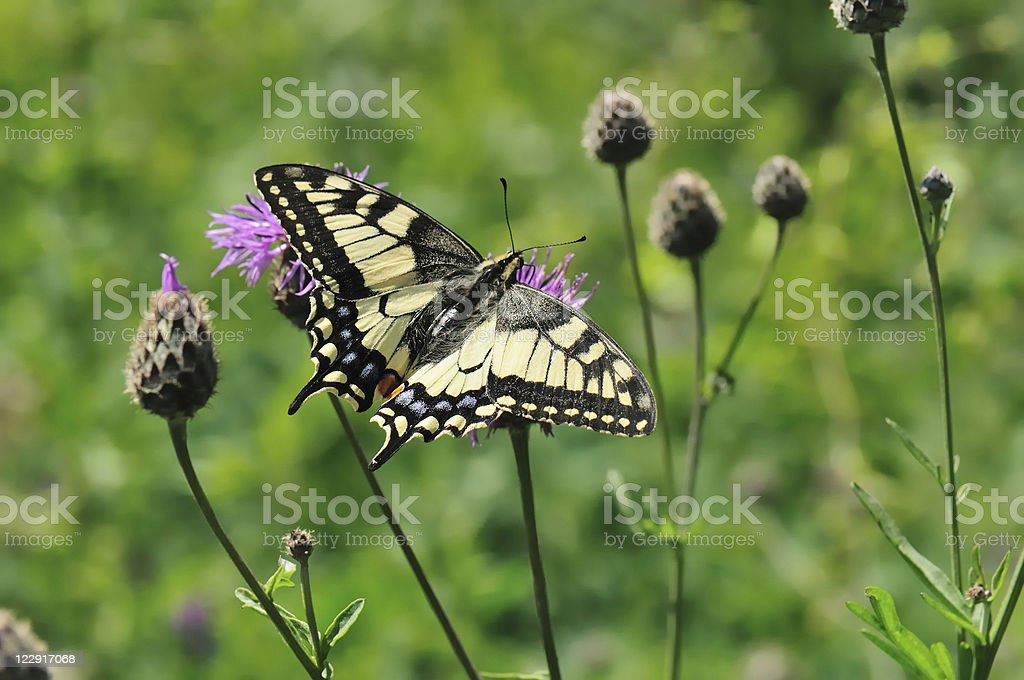 Beautiful colorful butterfly on a flower. stock photo