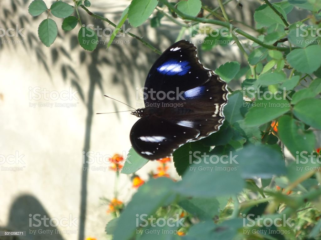 Beautiful Colorful Butterfly royalty-free stock photo