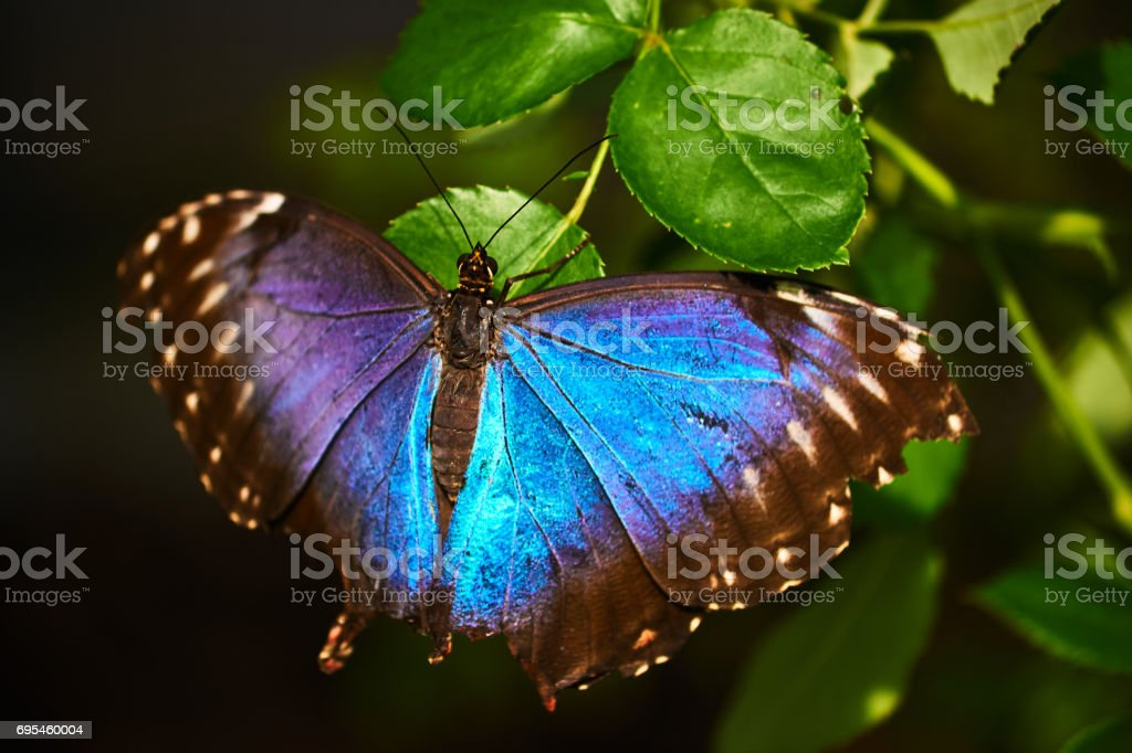 Beautiful colorful butterfly stock photo