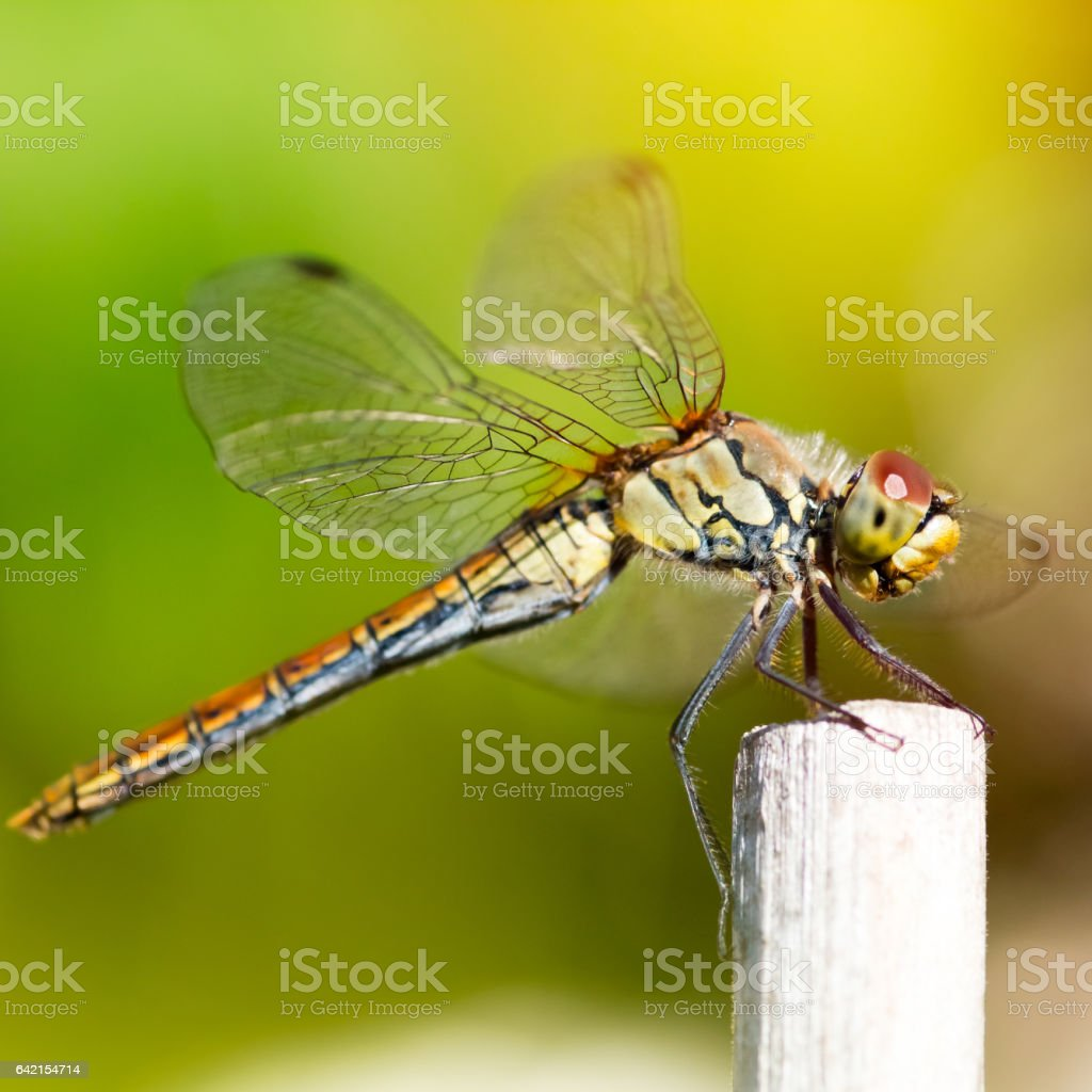 Macro in selective focus of beautiful and colorful multi colored...