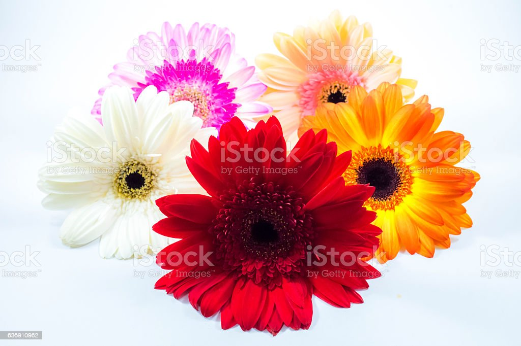 Beautiful colorful flower on white background. stock photo