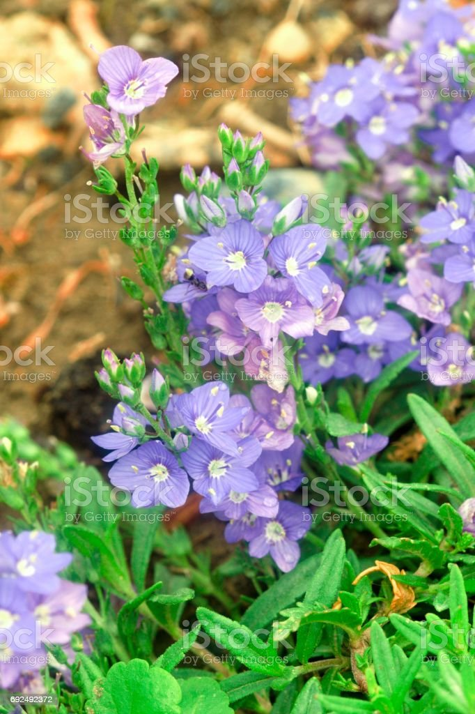 Beautiful colorful flowers in the summer garden stock photo