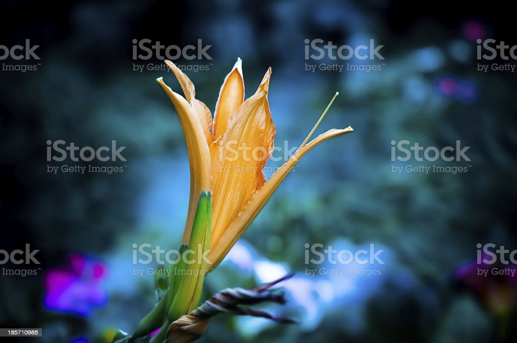 Beautiful colorful flowers. royalty-free stock photo
