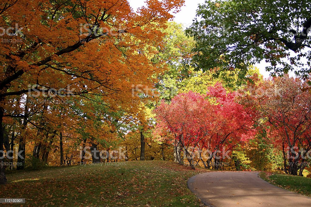 Beautiful, colorful trees in autumn at the park stock photo