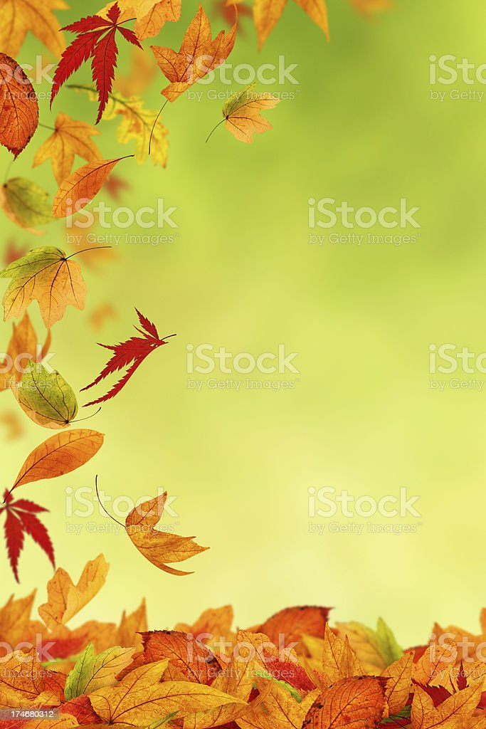 Beautiful Colors Of Autumn royalty-free stock photo