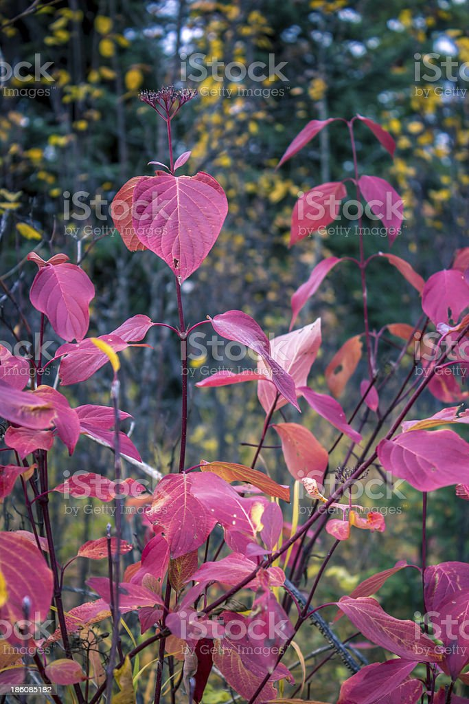 Beautiful Colors of Fall in  Mountains royalty-free stock photo