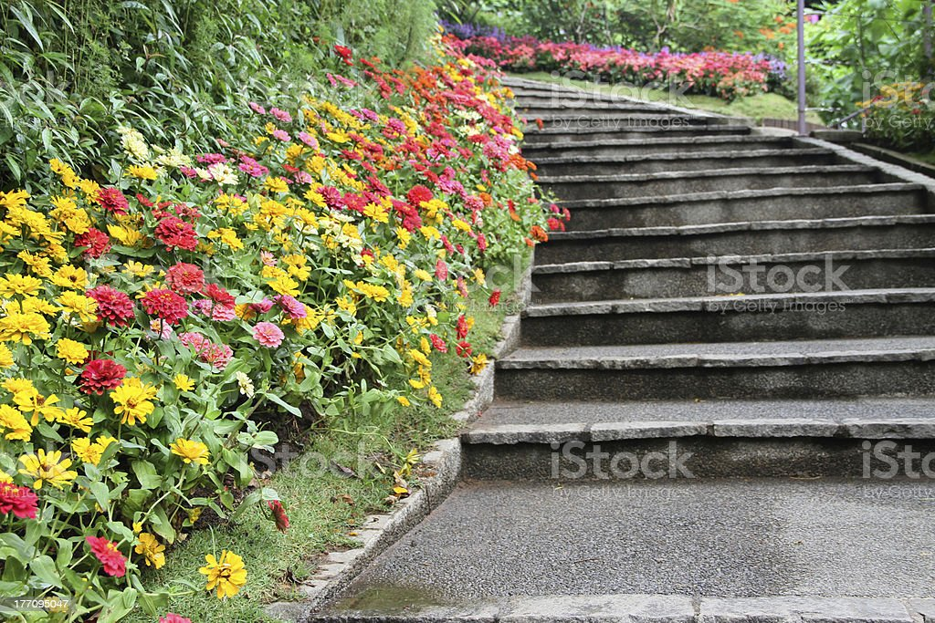 beautiful colourful flower garden stock photo