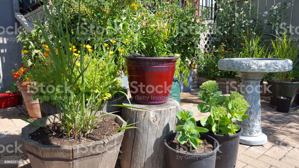 Ideas and variety of Container Gardening on small brick patio space