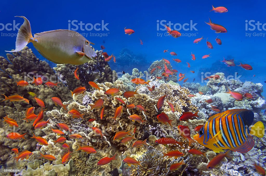 Beautiful coral garden in Red Sea stock photo