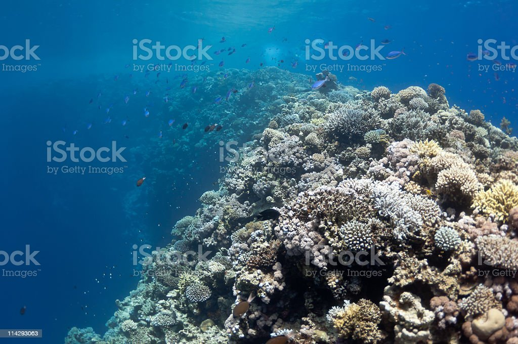 Beautiful coral reef near the Dahab city of Egypt stock photo