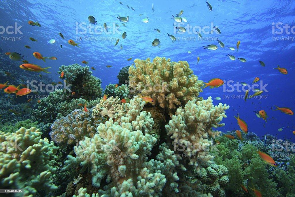 Beautiful Coral Reef stock photo