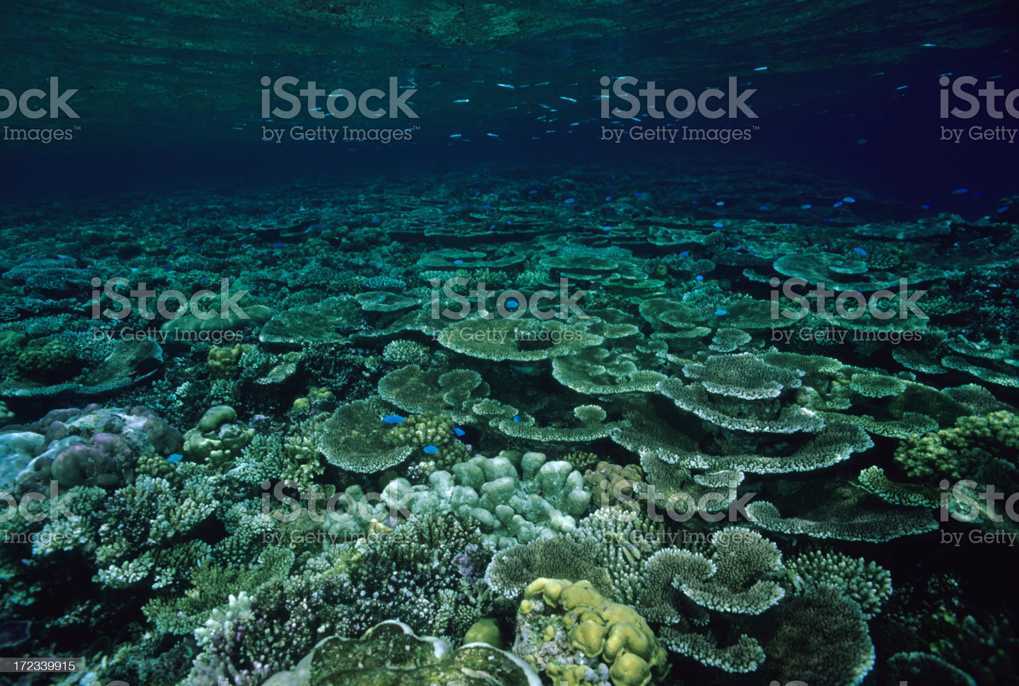 Beautiful Coral Reef royalty-free stock photo