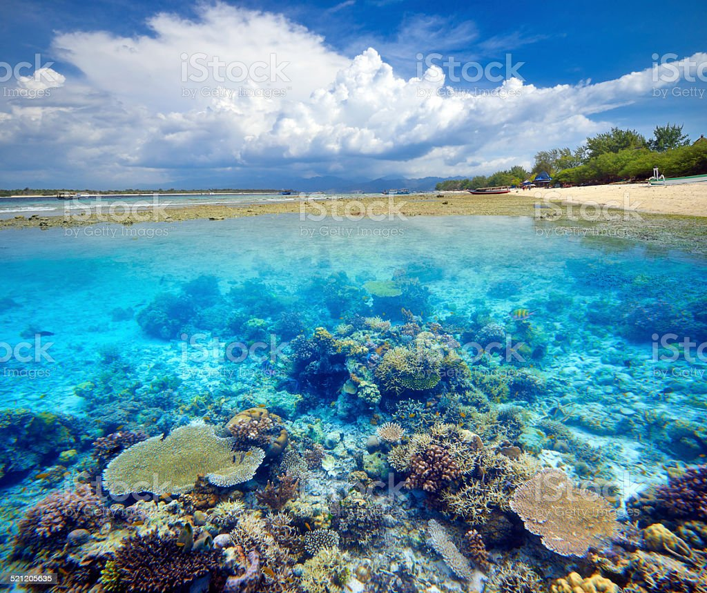 Beautiful Coral Reef. stock photo