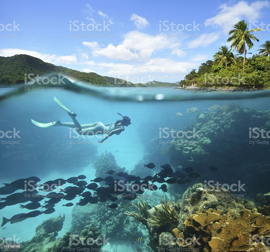 Beautiful Coral reef with lots of fish and a woman stock photo
