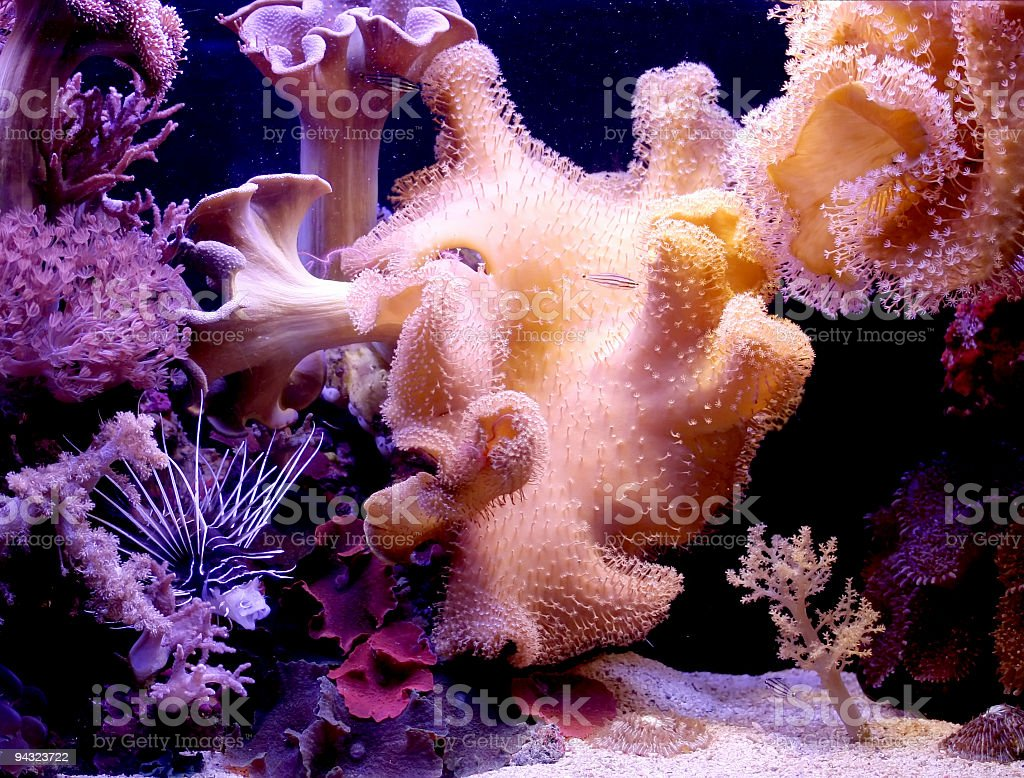 Beautiful Corals royalty-free stock photo