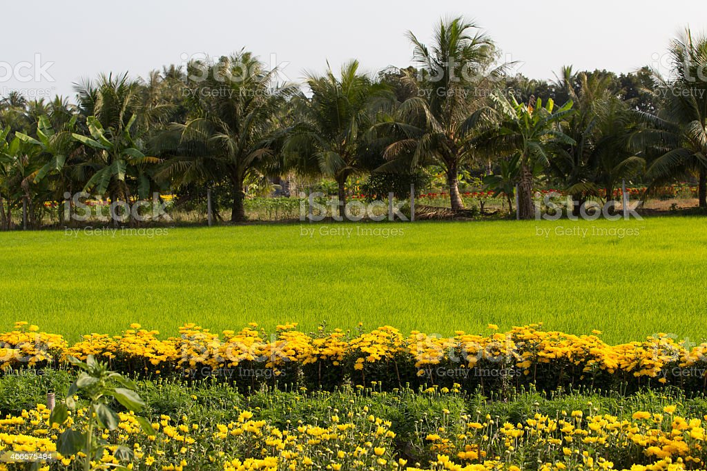 Beautiful country landscape in SaDec, Tien Giang, VietNam royalty-free stock photo