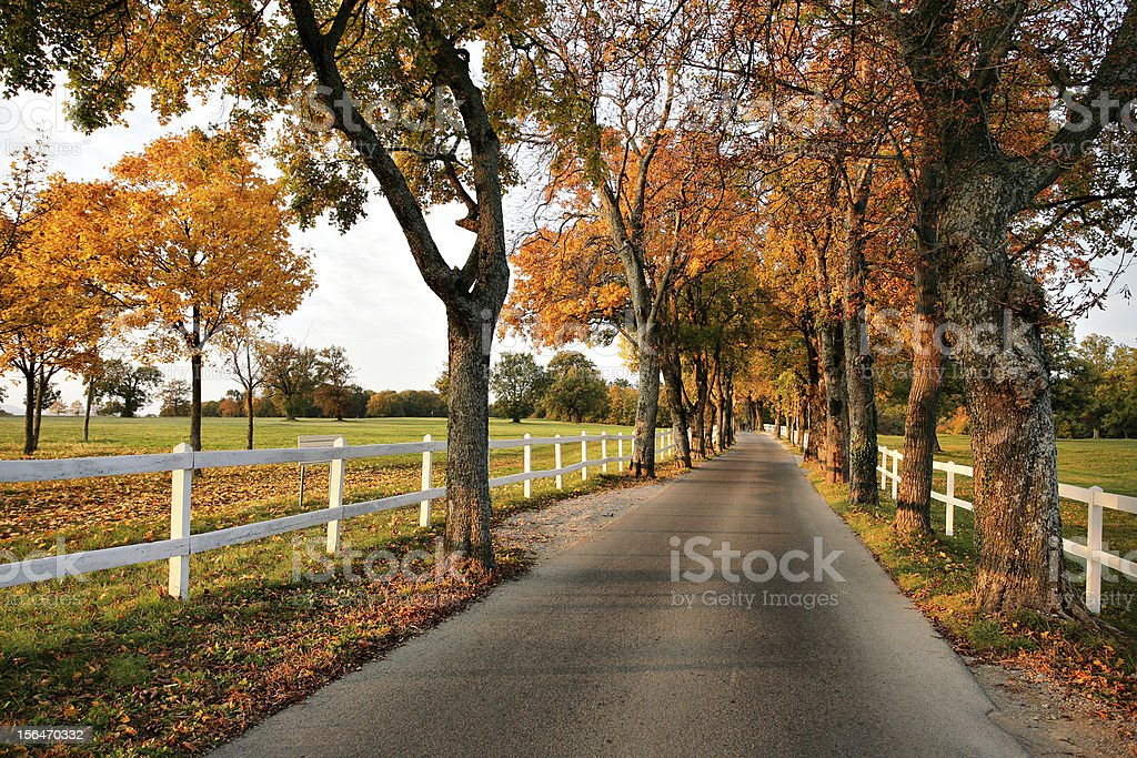 Beautiful country road in autumn royalty-free stock photo