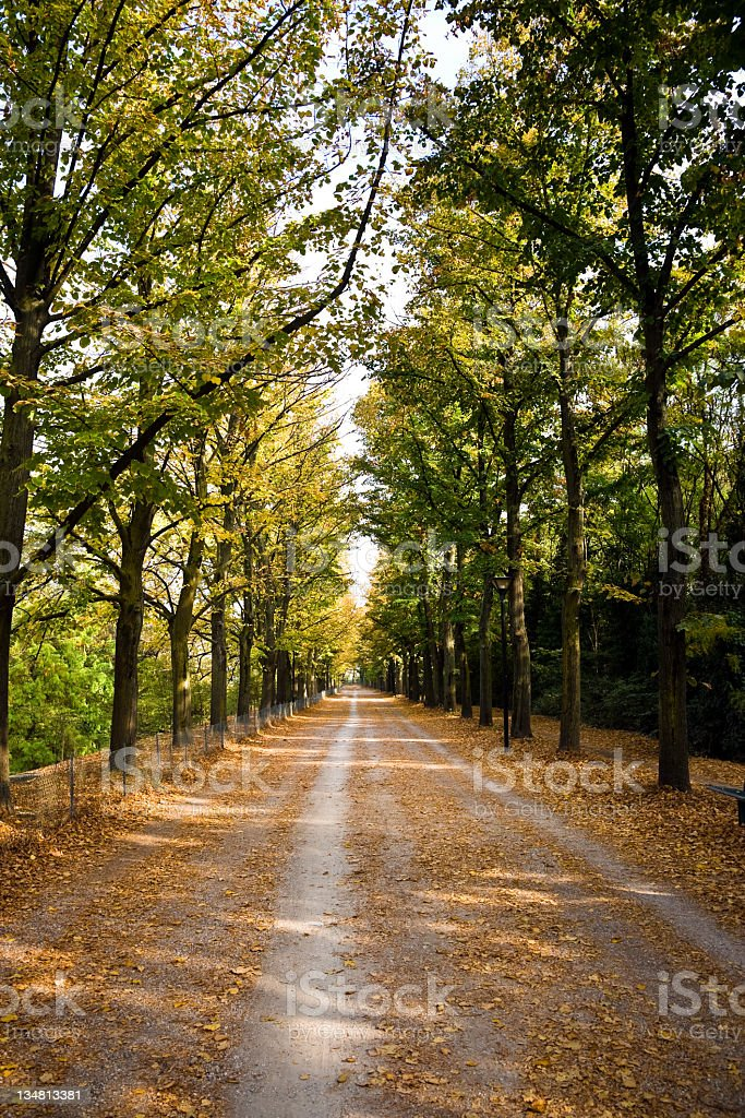 Beautiful country road royalty-free stock photo