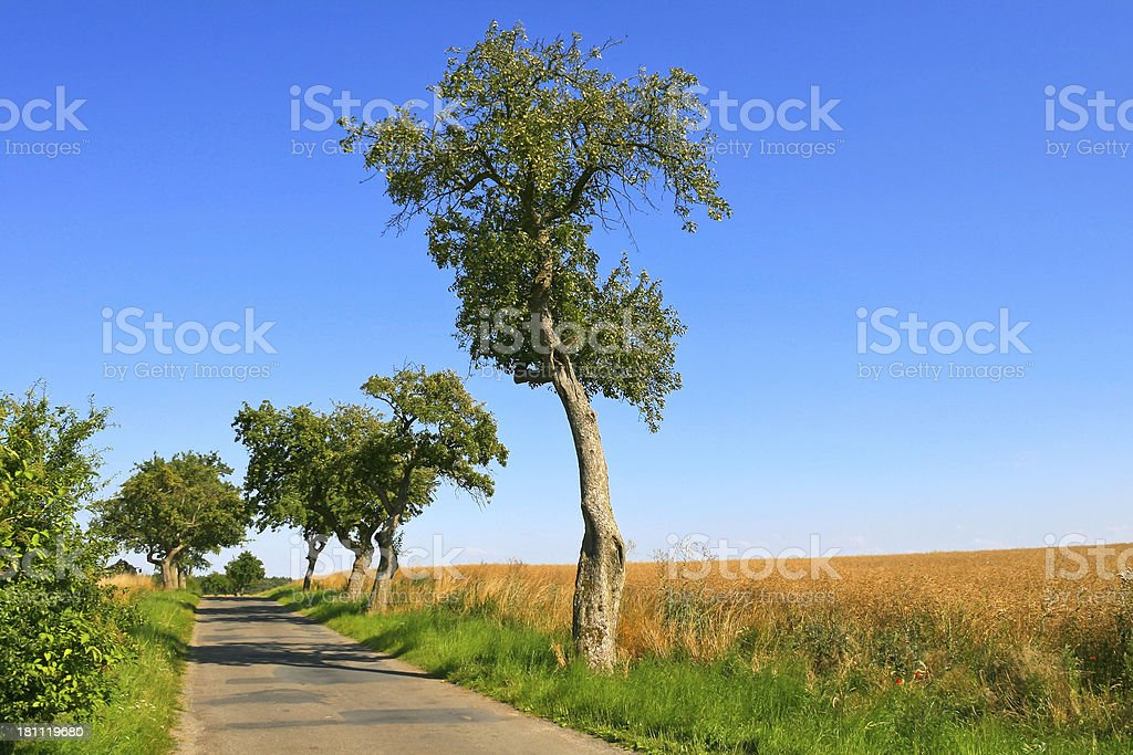 Beautiful Country Road stock photo