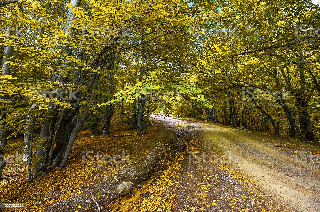 Beautiful countryside mountain road in autumn forest stock photo