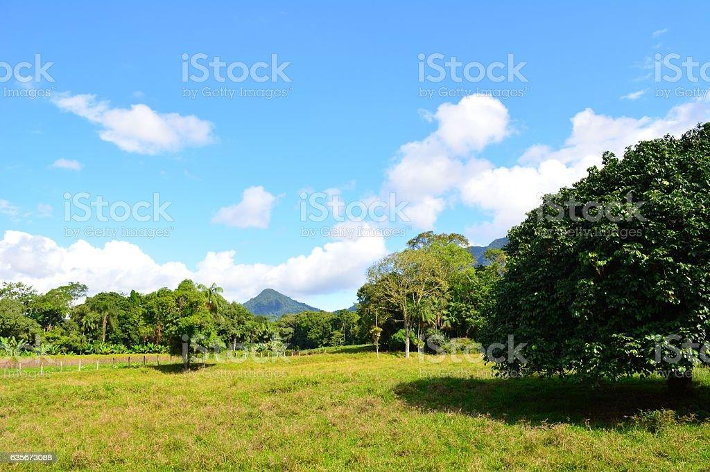 Beautiful countryside stock photo
