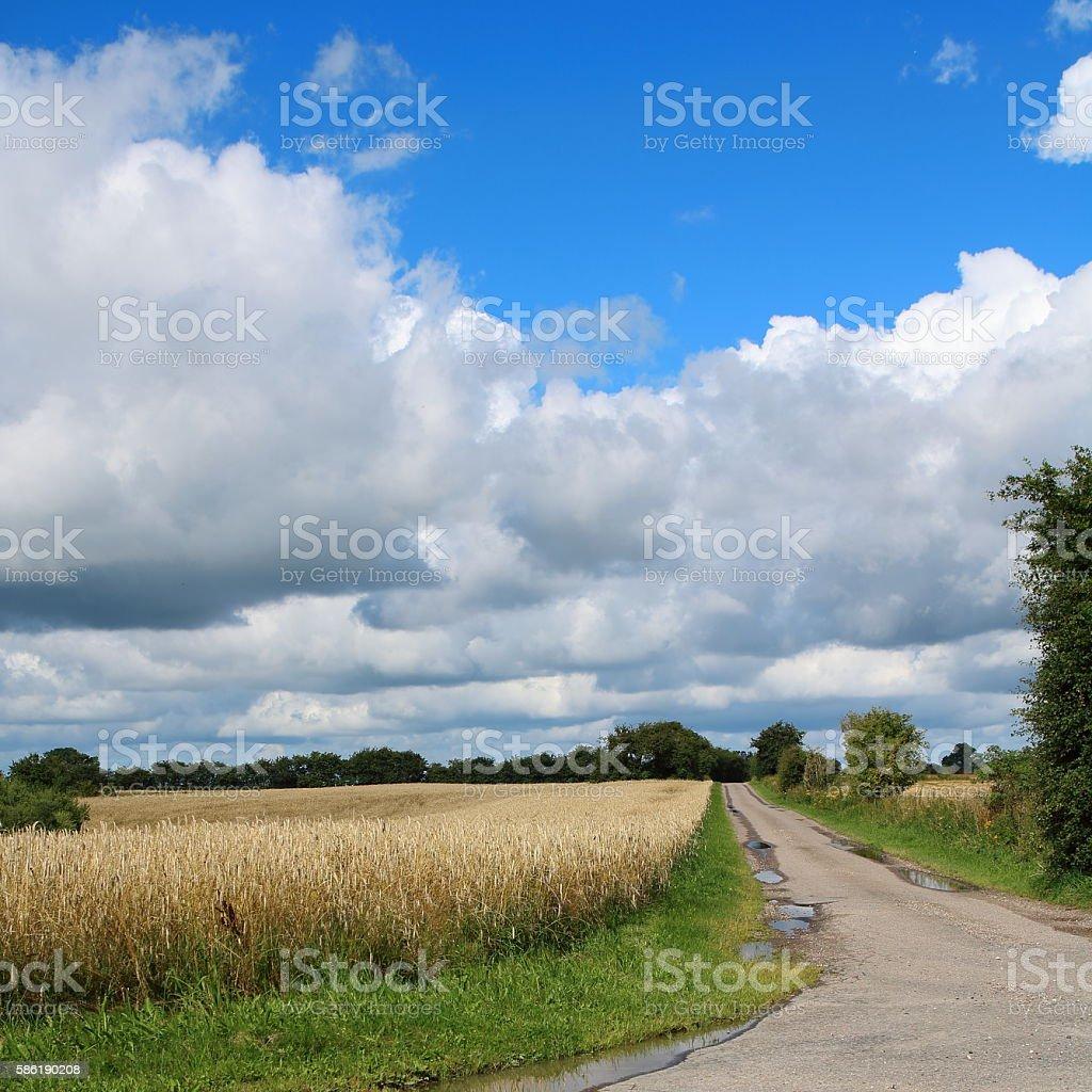 Beautiful countryside wheat fields in Denmark stock photo