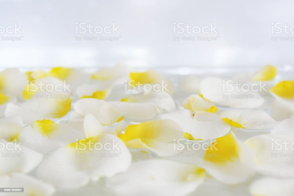 Beautiful cream, white scattered rose petals on an abstract white background with a soft focus. stock photo